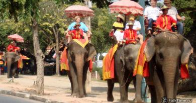Слоны как один из видов транспорта