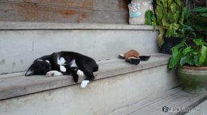 Жидкий кот на ступеньках массажного салона