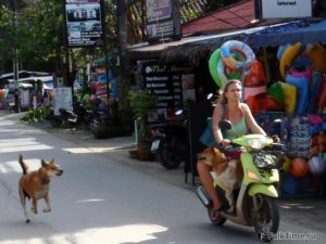 Собаки, девушка на мопеде и массажный салон