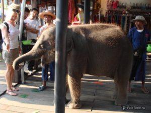 Слонёнок на плавучем рынке