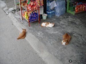 Три кота у частного магазина