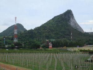 Виноградник, мельница, скала с Золотым Буддой