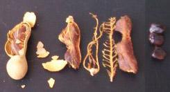 Тамаринд внутри: мякоть и семена