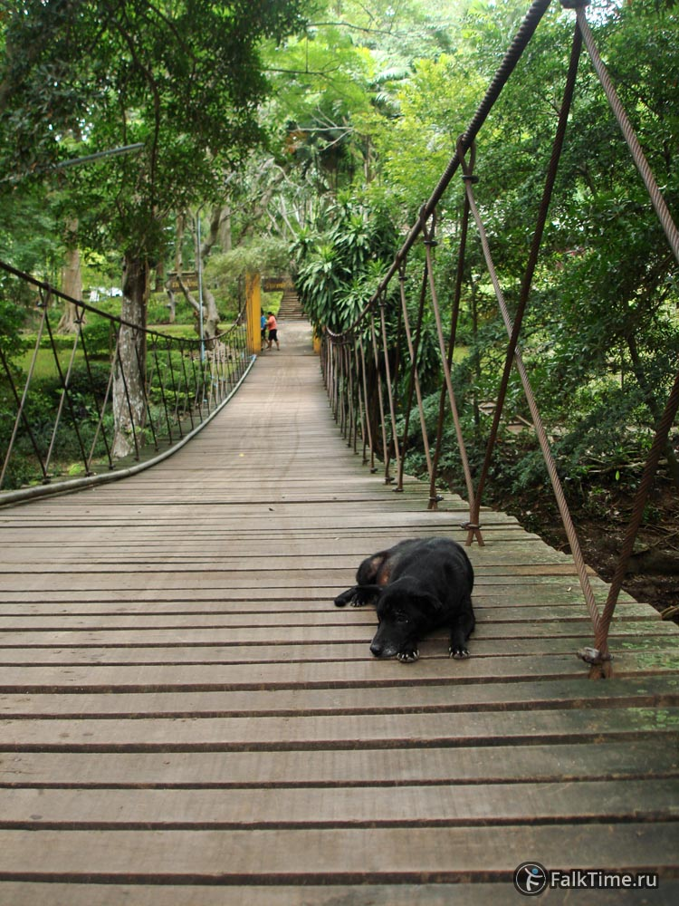 Собака на подвесном мосту