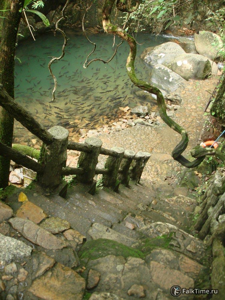 Карпы у водопада
