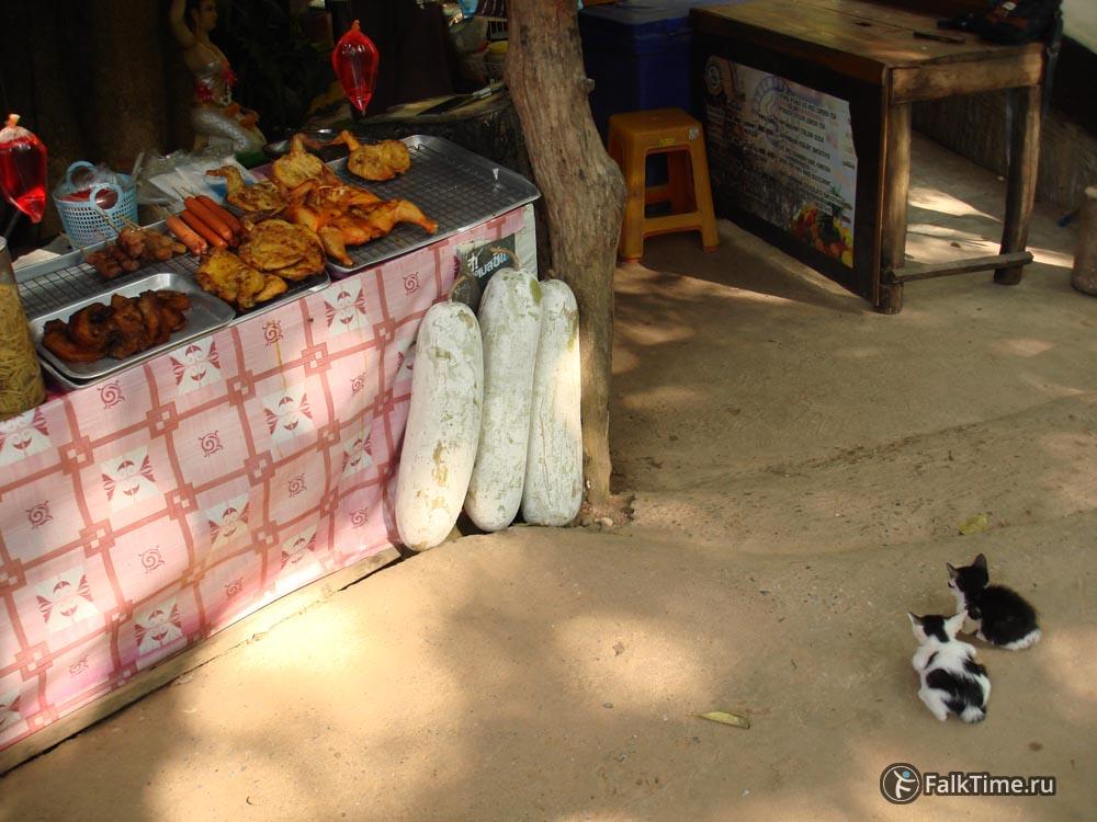 Котята и еда
